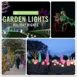 Atlanta Botanical Garden Garden Lights Holiday Nights