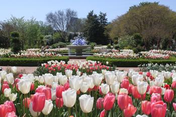 Atlanta Botanical Garden - Spring flowers