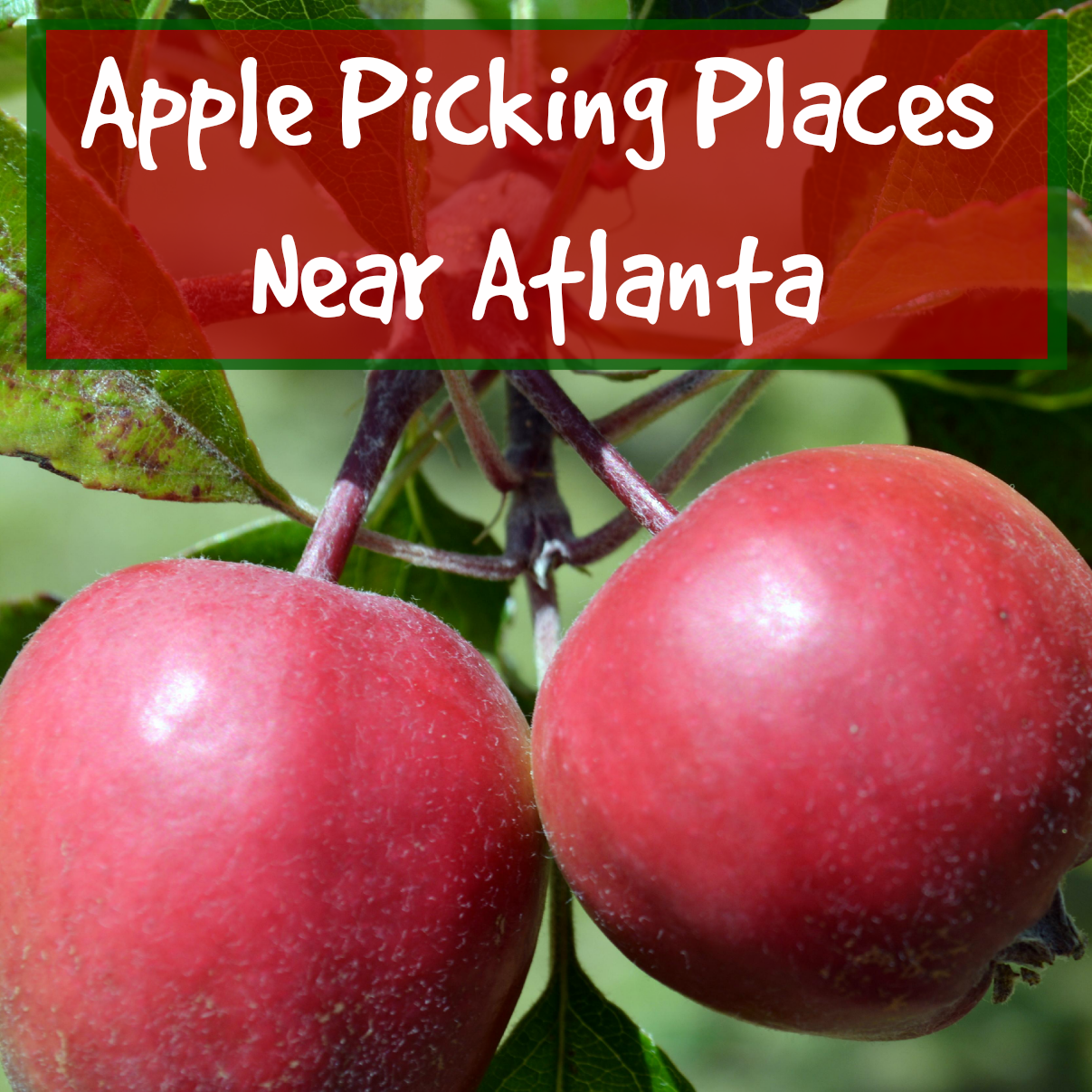 Atlanta Apple Picking - Apple Orchards
