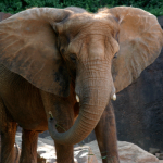 World Elephant Day at Zoo Atlanta