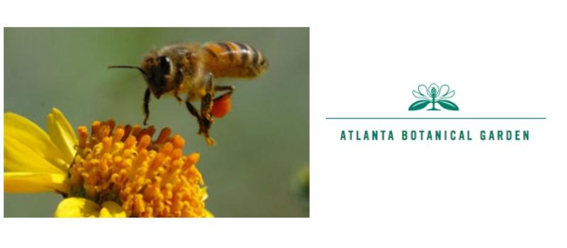 August 29, 2015: A Honeybee's Life at Atlanta Botanical Garden